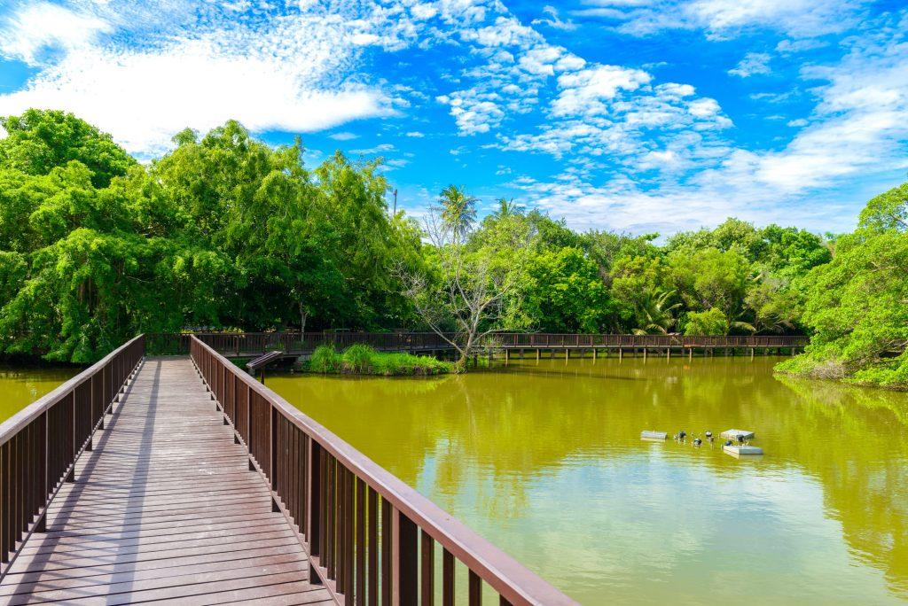 สะพานไม้ในสวนศรีนครเขื่อนขันธ์ บางกระเจ้า